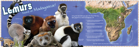 Pull-out lemur poster