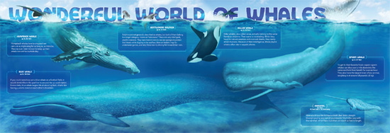 Pull-out whale poster