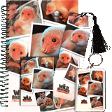 Newt the Pet Gift Set
